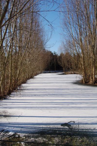 l'étang couvert de neige