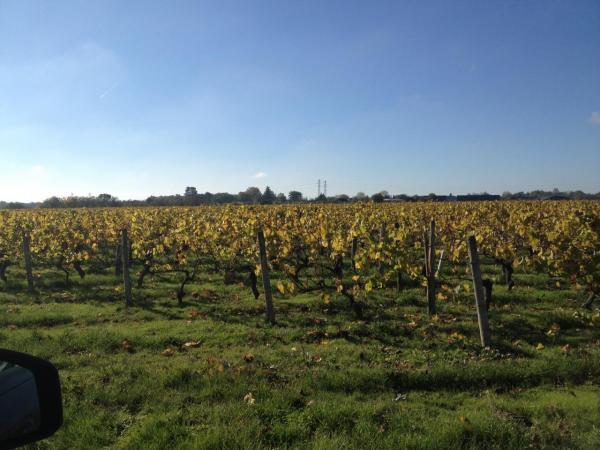 les vignes de Reuilly