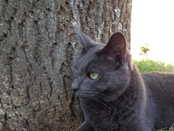 Tom, le chat de la maison